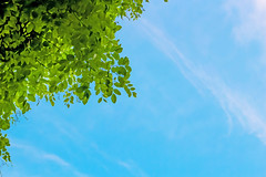Green leaves against the sky (diary of moon) Tags: life blue trees summer sky sunlight green nature ecology beauty leaves sunshine forest outdoors bush woods focus day branch bright vibrant vivid sunny fresh foliage growth backgrounds environment greenery lush foreground vitality