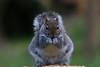 FULL FRONTAL (gazza294) Tags: flickr flicker flckr flkr garymargetts gazza294