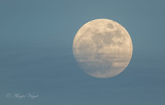 01222016 moon (AVo Images) Tags: sunset moon fog fullmoon moonrise whispyclouds