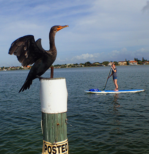 1_1_16   b paddleboard tour Lido Key Sarasota FL 06