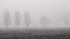 foggy (Sonne 2208) Tags: nebel feld usedom zempin schwarzweis