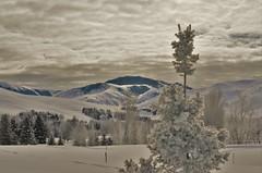 (T-Speng Photography) Tags: sky mountain tree beauty pinetree pine outdoors photography idaho sunvalley beaut