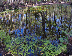 Swamp Reflections (jameskirchner15) Tags: trees reflection water river florida wideangle swamp cypress dunnellontrail
