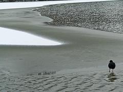 Ice Age - 001-0021_Web (berni.radke) Tags: schnee winter snow ice iceage eis mnster winterlandscape winterlandschaft aasee eiszeit