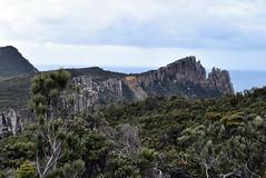 Cape Pillar (dracophylla) Tags: tasmania tasmanpeninsula capepillar