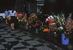 Saudade 596 ( Portimagem) Tags: flowers flores portugal madeira historia funchal patrimnionacional