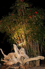 IMG_6257 (jalexartis) Tags: lighting nightphotography night dark landscaping nandina nandinadomestica