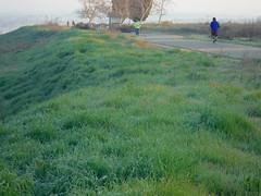 DSCF1212.JPG Eaton Trail on River Bluff (niiicedave) Tags: california morning grass sunrise dawn fresno jogging joggers riverterrace centralcalifornia sanjoaquinvalley friant lewisseatontrail sanjoaquinriverparkway urbantrails sanjoaquinrivertrail