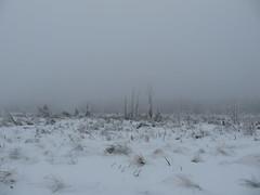 IMG_8598 (Bike and hiker) Tags: winter mist hiver sneeuw neige venn hoge hautes fagnes venen hohes botrange neur bayehon low