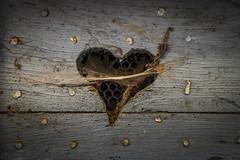 Montpezat de Quercy 1 (patrice.beaud9) Tags: coeur porte bois araignée grillage toile clouté