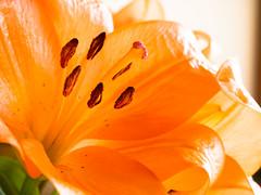 (Lily) (wakyakyamn) Tags: flower lily olympus  omd   em10markii