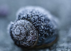 frosty winter hide-away (nolleone--Nol, like Christmas) Tags: blue winter macro nature spiral soft frost crystals dof bokeh shell snail tiny chilly wintery