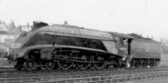 Gresley A4 60024  Kingfisher, at Aberdeen Ferryhill (61B) shed (rac819) Tags: steam railways britishrailways steamlocomotives uksteam brsteam