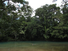 """Cascades de Agua Azul: Mister J pique une petite tête <a style=""""margin-left:10px; font-size:0.8em;"""" href=""""http://www.flickr.com/photos/127723101@N04/25783526076/"""" target=""""_blank"""">@flickr</a>"""