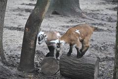 DSC_0033 (Rinswid) Tags: park nature animal spring kharkov feldman ecopark