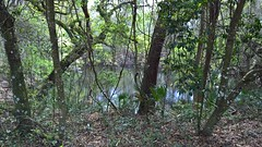 Wilderness Park (heytampa) Tags: park sinkhole wildernesspark