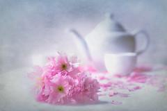 Cherry Blossom Tea #2 (Repp1) Tags: pink flowers stilllife rose tea cherryblossoms while blanc naturemorte th thire fleursdecerisier tabletopphotography