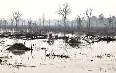 Cambodia (james.mason01) Tags: travel nature forest asia cambodia explore siem reap sunken angkor