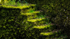 Reclaimed by nature... (.: mike | MKvip Beauty :.) Tags: orange green nature yellow stairs canon germany prime moss spring europe availablelight sony naturallight if alpha karlsruhe mth wideopen 200mm canonfd 28 vintagelens primelens manuallens manualexposure sonyalpha manualfocusing vintageprime emount mkvip manualondigital 200mm28 canonnewfd canonnfd sonyalpha6000 ilce6000 sonyilce6000 sony6000 6000 canonfd200mm28iiif canonnewfd200mm28iiif nfd200mm28iiif newfd200mm28iiif canonnfd200mm28iiif