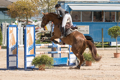 DSC09057_s (AndiP66) Tags: springen hildisrieden reitsportcenter estermann traselinge 2016 september pferd horse schweiz switzerland kantonluzern cantonlucerne concours wettbewerb horsejumping equestrian sports springreiten pferdespringen pferdesport sport sony sonyalpha 77markii 77ii 77m2 a77ii alpha ilca77m2 slta77ii sony70400mm f456 sony70400mmf456gssmii sal70400g2 andreaspeters luzern ch