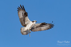 Osprey returns from Home Depot sequence - 7 of 27