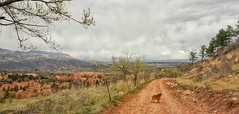 Helping Fat-Ass Dave Burn Beer Calories (Flickr Goot) Tags: dog pet clouds landscape mutt colorado hiking samsung gardenofthegods canine trail galaxy springs co april rocket s6 2016 redrockscanyonopenspace