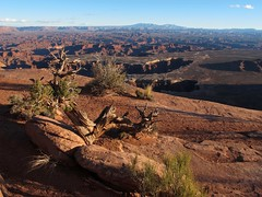 Endless Mysteries (zoniedude1) Tags: light sunset wild southwest nature beauty rock landscape outdoors utah sandstone shadows view hiking scenic illumination erosion adventure explore edge canyonlandsnationalpark coloradoriver canyonlands vista redrocks geology wilderness southernutah redrock slickrock rim overlook exploration discovery canyons whiterim precipice hoodoos rockformations weathering overtheedge cliffedge canyoncountry islandinthesky sanjuancounty grandviewpoint outinthewild verticaledge zoniedude1 earthnaturelife canonpowershotg12 pspx8 6240ftelevation southernutah2015 sandstonerockscape canyonlandsvista gnarlyjunipertree endlessmysteries