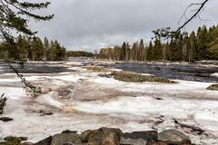 IMG_8618-Edit (Juha Hartikainen) Tags: finland fi oulu kiiminki northernostrobothnia