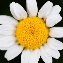 Consequences (Thomas Hawk) Tags: sanfrancisco california goldengatepark flowers usa flower unitedstates unitedstatesofamerica conservatoryofflowers fav10