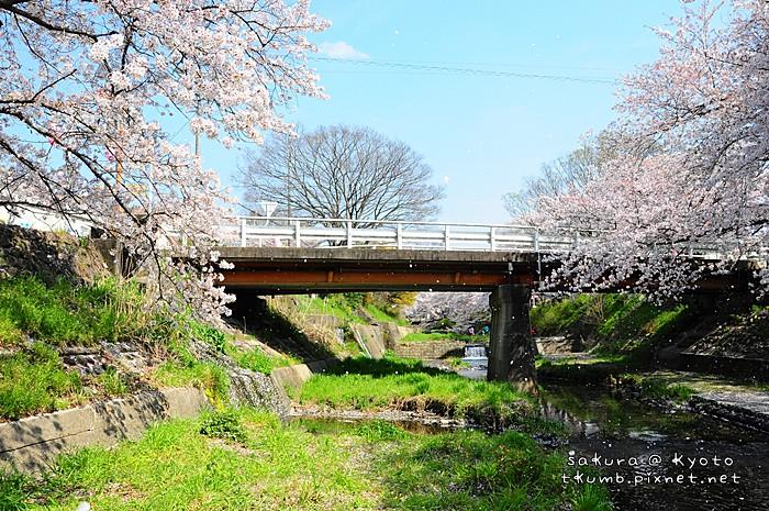 2014玉川 (7).jpg