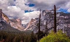 Spring in Yosemite (JarrodLopiccolo) Tags: california trees clouds dead spring yosemite halfdome yosemitenationalpark yosemitenation