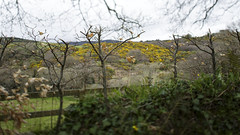 (Wendy:) Tags: fence hedge wicklow beech gorse tiltshift glencree