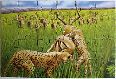 "Puzzle Book ""Big Cats"" (Leonisha) Tags: hunting puzzle cheetah bigcats jagd jigsawpuzzle gepard grosskatzen"