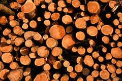 DSC_1724 (Robinson-Photography) Tags: trees field closeup sheffield logs signpost blueskies bradfield tractormark