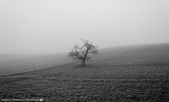 On a foggy Morning in early March 3. (andreasheinrich) Tags: morning blackandwhite cold tree field misty fog germany landscape deutschland march nebel feld kalt landschaft morgen baum mrz badenwrttemberg blackandwhitephotos neckarsulm neblig schwarzweis nikond7000