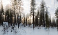 fantasy (Stefan Giese) Tags: canon finnland struktur structure fantasy effekt 6d 24105mm