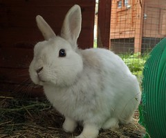 Joe (rjmiller1807) Tags: bunny volunteering april shelter bun oxfordshire harwell 2016 animalwelfare lookingforahome rspa rehoming rspcaoxfordshire
