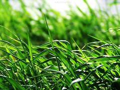 Spring green vol 2 (Kurucz Andrea) Tags: colour green spring grn tavasz fujifinepix zld