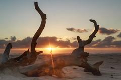 Sunrise (kylieardill) Tags: ocean travel sky orange sun beach silhouette yellow clouds sunrise person sand branches australia nsw newsouthwales rays sunrays deadwood ballina flatrock beachwood orangeglow lightburst eastballina