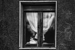 didimus (francesca am.) Tags: window cat didimus gatto finestre