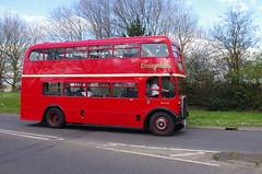 IMGP0101 (Steve Guess) Tags: uk england bus london museum transport surrey gb cobham regent weybridge brooklands weymann aec rlh byfleet lowhight rlh61 mxx261