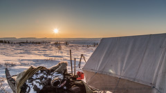 Earth Day Camp location (Mathieu Dumond) Tags: morning camping trees snow canada sunrise spring tent arctic april sled nunavut spruces kugluktuk mathieudumond umingmakproductions earthdayphotoproject2016