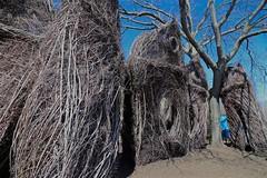 Patrick Dougherty's Stick Sculpture (smilla4) Tags: sculpture museum sticks massachusetts essex peabody salemmassachusetts peabodyessexmuseum patrickdougherty sticksculpture peabodyessexmuseumsalem