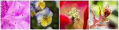 Un paseo por el Botnico (SinRaquel) Tags: flores color planta luz de flor colores desenfoque campo botnico macrofotografa profundidad floracin