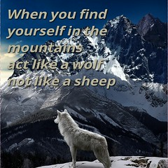 Wolf vs sheep (Clever.Inspired.Successful) Tags: family friends summer food art me girl beautiful smile fashion fun happy amazing wolf inspired follow clever repost nofilter photooftheday picoftheday followme successful likeforlike instadaily instagood instamood like4like