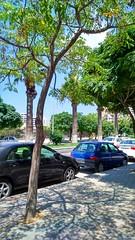 شارع بيروت (nesreensahi) Tags: street trees sky cars nature landscape syria siria سوريا syrie latakia اللاذقية سورية