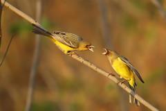 0E6A6521 bnt (bhagtav) Tags: wild india bird nature canon wing feather aves aerial avian chhattisgarh