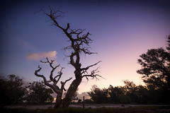 Dead Tree (Astronomy*Domine) Tags: pink blue sunset tree dead purple perth 14mm samyang
