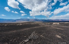 A study in contrasts (Photosuze) Tags: sky mountains clouds landscape land deathvalley stark desolate volcanic treebranch dessicated
