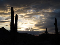 Evening Atmospherics (zoniedude1) Tags: sunset arizona cactus sky mountains southwest nature beautiful beauty clouds outdoors evening view desert scenic silhouettes stormy adventure explore exploration epic sonorandesert saguaros saguarocactus cloudformations desertscape spellbinding outinthewild lapazcounty zoniedude1 plomosamountains bestsunsetsintheworld earthnaturelife cloudsstormssunsetssunrises canonpowershotg12 pspx8 eveningatmospherics